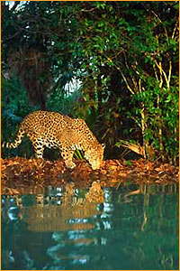 Belize Zoo -Ecological Tours Services